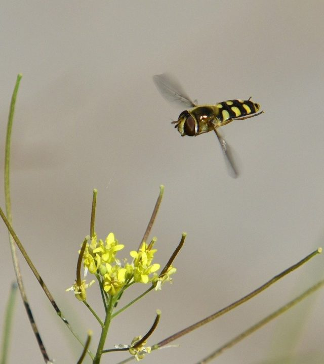 fly, flower, nature